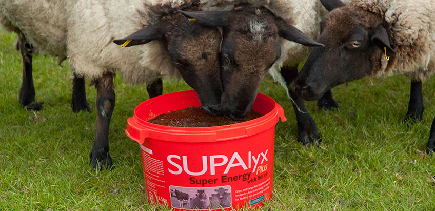 Harpers Feeds Lifeline Sheep feed