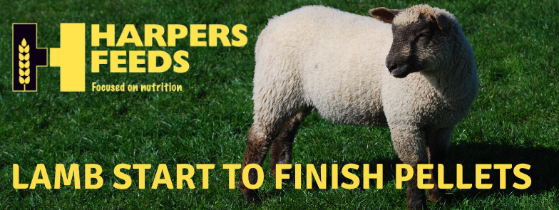 Harpers_Feeds_Sheep_Blog_2.png