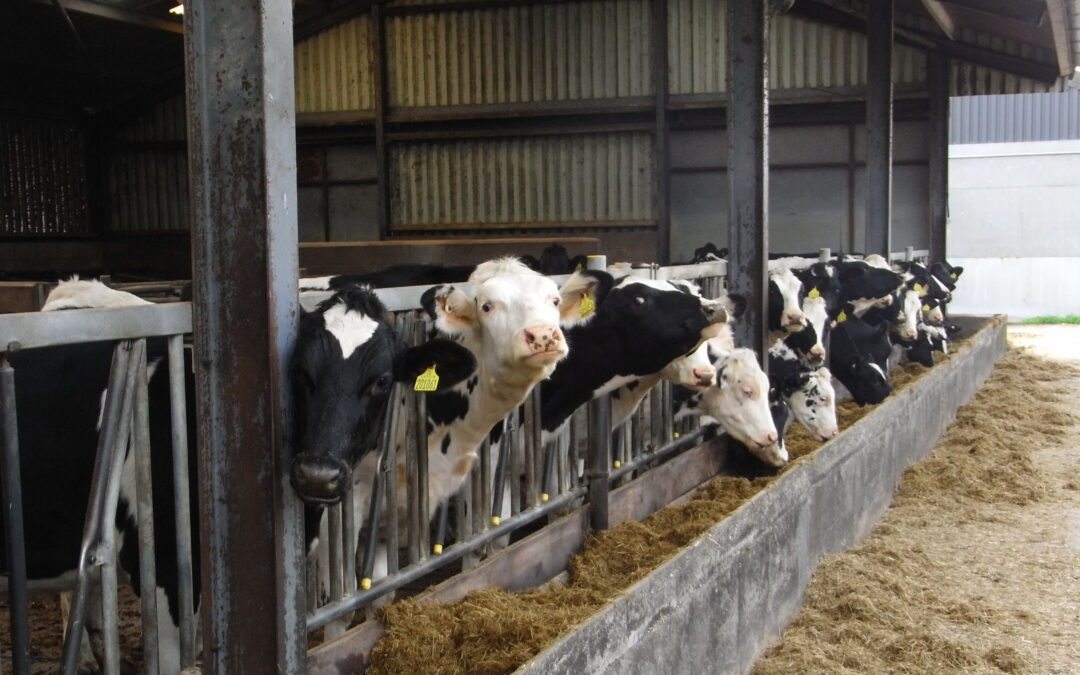 Cost effective milking this winter